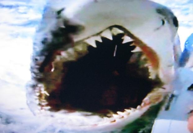 shark attack 1.4.14