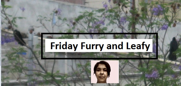 Friday Furry and Leafy icon