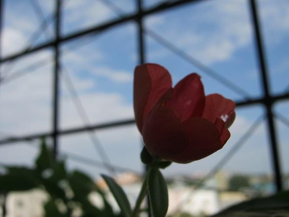 surprise plant flower IMG_0022 12.4.15