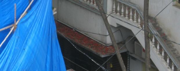 krishnachura petals on stairs  IMG_0009 17.6.15