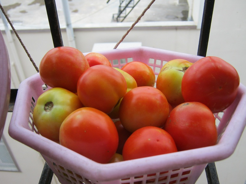 tomato IMG_0004 19.6.15