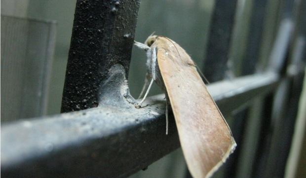 moth IMG_0004 15.7.15