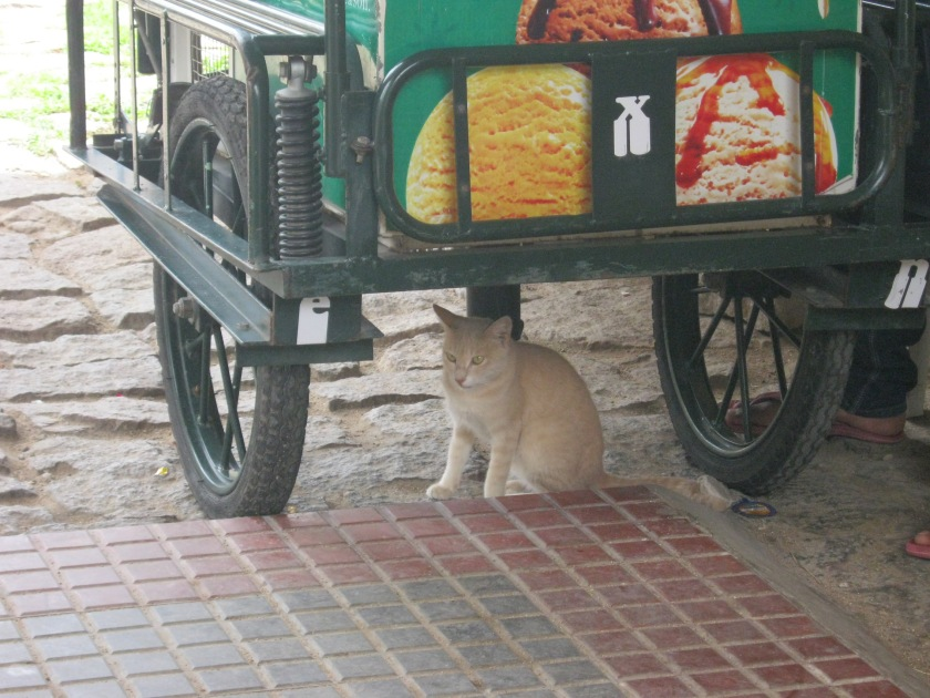cat cool in golconda fort 23.8.15 IMG_0554