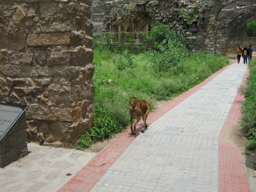 dog in golconda fort 23.8.15 IMG_0534