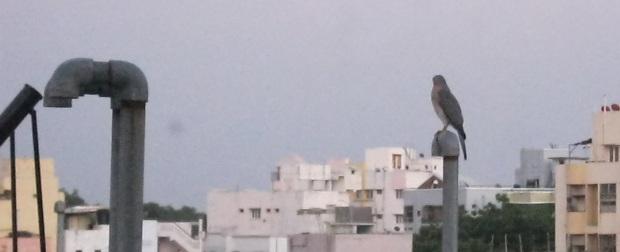 falcon 22.9.15 IMG_0077